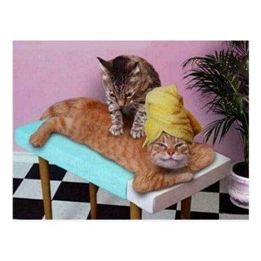 stargiftshop Funny Cat Massage Postcard