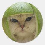 Funny Cat Merchandise Classic Round Sticker