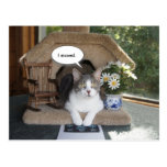 Funny Cat Moved New Address Postcard