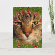 Funny Cat Naughty Or Nice Christmas Holiday Card