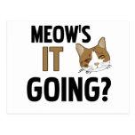 Funny Cat / Pet Post Cards