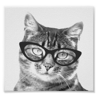 Funny cat photo posters