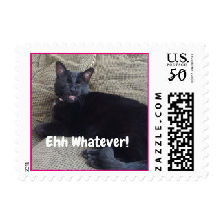 Funny cat postage stamps