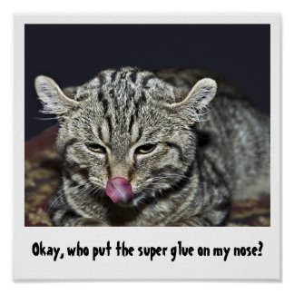 Funny Cat Poster