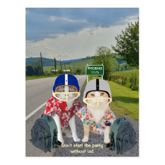 Funny Cat Sports Fans Postcard