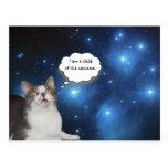 Funny Cat Star Gazer Postcard