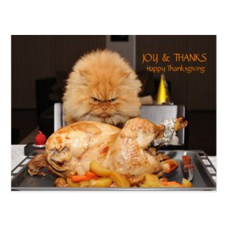 Funny Cat Thanksgiving postcard