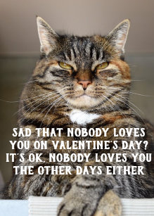 Funny Cat Valentine S Day Memes World Of Cats