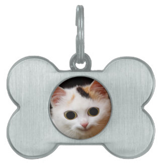 funny cat waiting for mom and love pet name tags