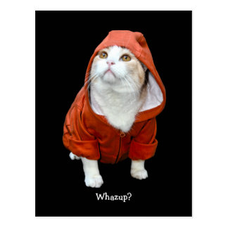 Funny Cat Whazup? Postcard