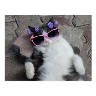 Funny cat with pink glasses postcard