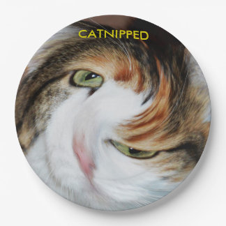 Funny Catnipped Cats Paper Plate