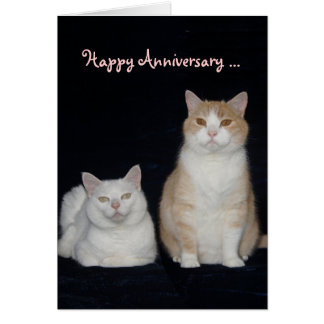 Funny Cats Anniversary Greeting Cards