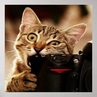 Funny cats - cat camera - cat bite poster