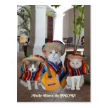 Funny Cats Feliz Cinco de Mayo Postcard
