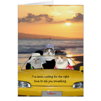 Funny Cats on the Beach on a Date Greeting Card