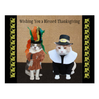 Funny Cats Thanksgiving Postcard