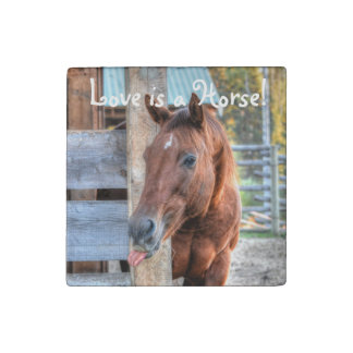 Funny Chestnut Horse Friend & Barn, Equine Photo Stone Magnet