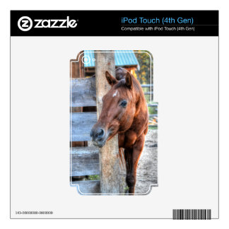 Funny Chestnut Horse Mare Photo Gift Decals For iPod Touch 4G