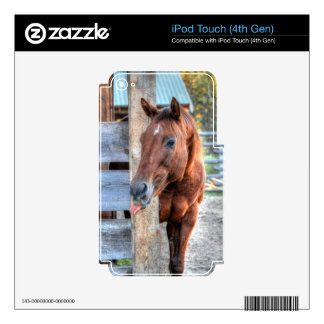 Funny Chestnut Horse Mare Photo Gift Skin For iPod Touch 4G