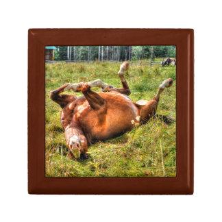Funny Chestnut Stallion Rolling in Grassy Field Keepsake Box