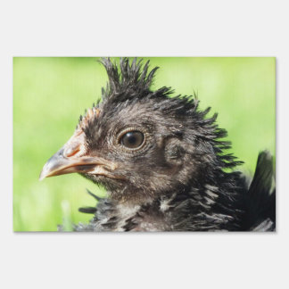 funny chicken chicks sign