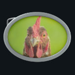 "Funny Chicken Farm Animal Belt Buckle<br><div class=""desc"">Funny portrait photo of a chicken against a green background.</div>"