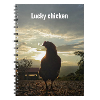 Funny Chicken in backlight 01.3 Notebook