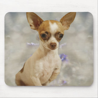 Funny Chihuahua Puppy (Cream/Brown) First Step Mouse Pad
