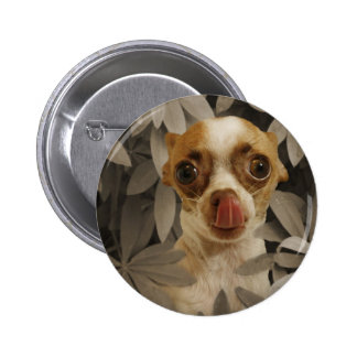 Funny Chihuahua Puppy (Cream/Brown) Tongue Poke Pinback Button