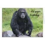 Funny Chimpanzee Birthday, wanna monkey around?! Card