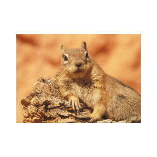 Funny chipmunk lying on a rock canvas prints