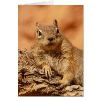 Funny chipmunk lying on a rock card