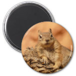 Funny chipmunk lying on a rock fridge magnets