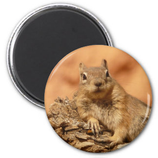 Funny chipmunk lying on a rock magnet