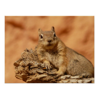 Funny chipmunk lying on a rock poster