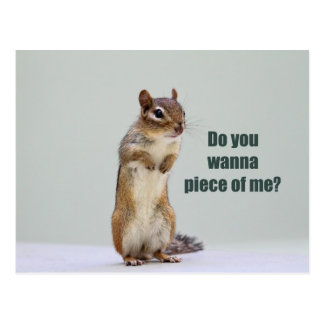 Funny Chipmunk Picture Postcards