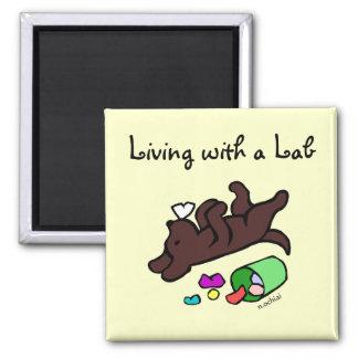 Funny Chocolate Labrador Cartoon Illustration 2 Inch Square Magnet