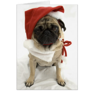Funny Christmas Card - Puggy