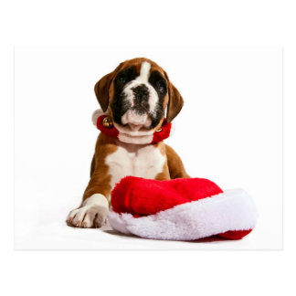 funny Christmas dog boxeadores puppy Tarjetas Postales