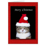 Funny Christmas Greeting Card, Cat with Santa hat
