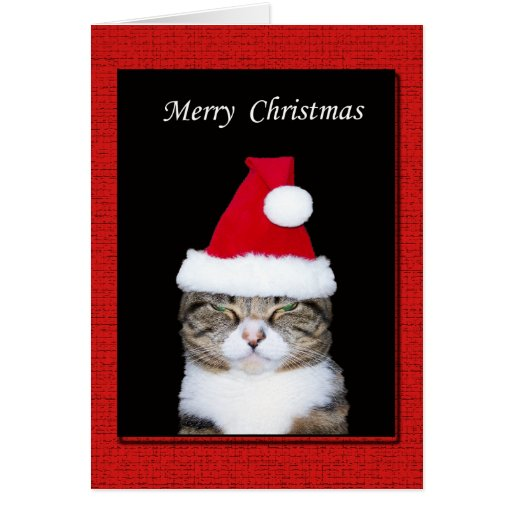 funny christmas greeting card cat with santa hat greeting