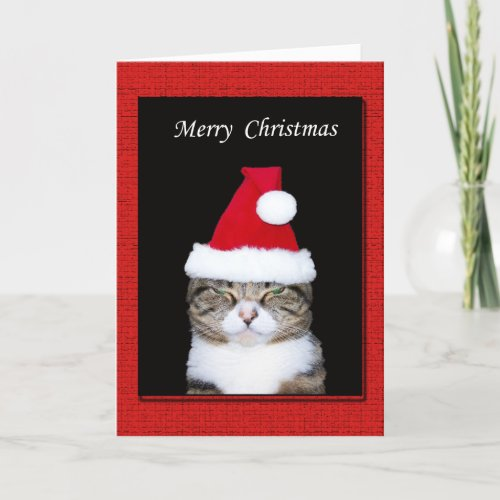 Funny Christmas Greeting Card Cat with Santa hat Holiday Card
