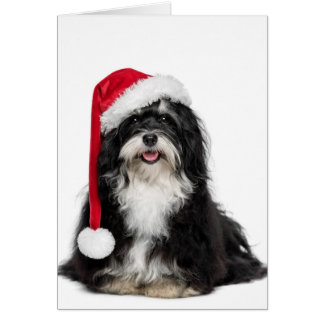 Funny Christmas Havanese Dog With Santa Hat Card