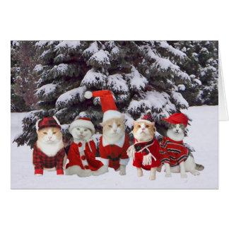 Funny Christmas Kitty Cats Card