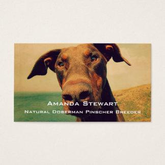 Funny Closeup of a Natural Doberman Dog Business Card