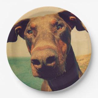 Funny Closeup of a Natural Doberman Dog Paper Plate