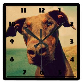 Funny Closeup of a Natural Doberman Dog Square Wall Clock