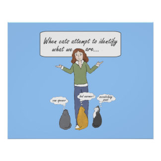 Funny Clueless Kitties Poster Print