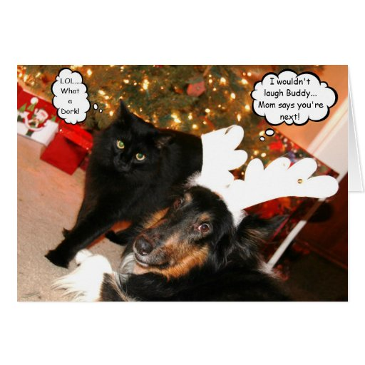 funny collie amp black cat christmas card 2 zazzle